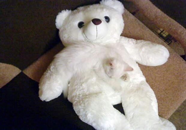 Найди кота: хитрые усатые-полосатые, которых невозможно найти нафото