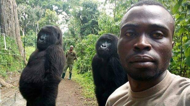 Почему люди так не похожи на человекообразных обезьян