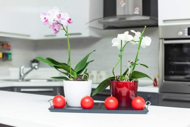 Куда переставить орхидеи на зиму