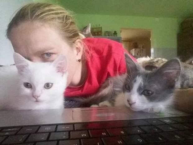 Один в поле… Женщина случайно заметила котёнка возле трассы – и это полностью изменило его судьбу!