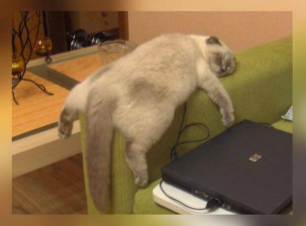 10 фото-доказательств того, что коты могут спать где и когда угодно. Часть вторая