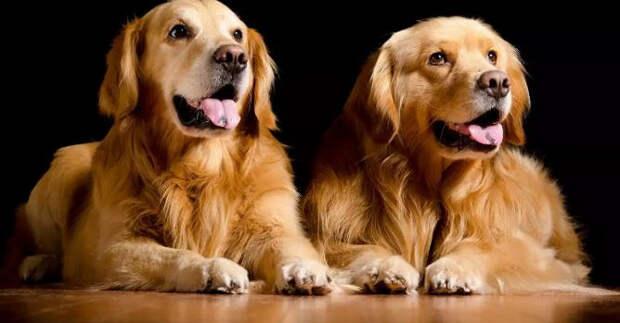 Топ-3породы собак продлевающих жизнь своему хозяину