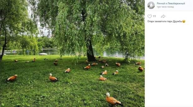 Фото дня: огари оккупировали парк Дружбы