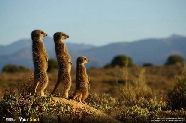 Лучшее от National Geographic (2)