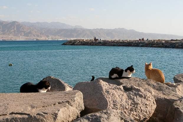 кошки пляж море