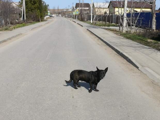 Пройду по Абрикосовой. Одноэтажный Севастополь с песней