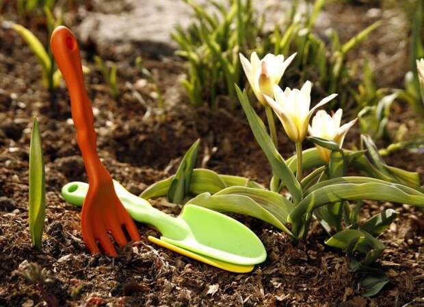 http://womanadvice.ru/sites/default/files/imagecache/width_660/images_zip/23/24_04_17/sadovaya_azaliya_-_vse_tonkosti_uhoda_i_vyrashchivaniya_rododendrona/foto13_podkormka_sadovoy_azalii.jpg