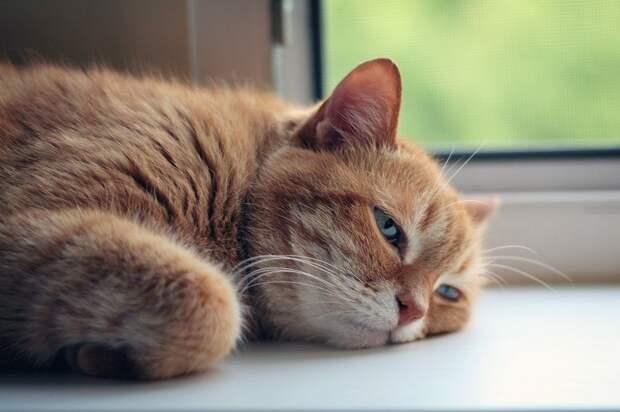 Ветеринары Ижевска рассказали, как уберечь питомца от теплового удара