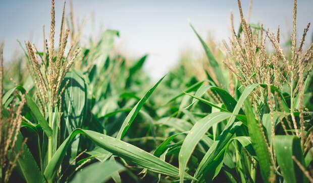 Российские сельхозпроизводители покоряют мировые рынки