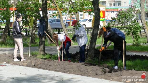В Котовске высадили 50 кустов сортовой сирени