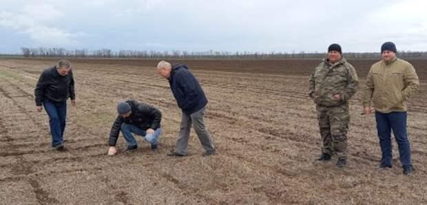 Погодный экстрим: аграрная политика Ставрополья неучитывает изменения климата