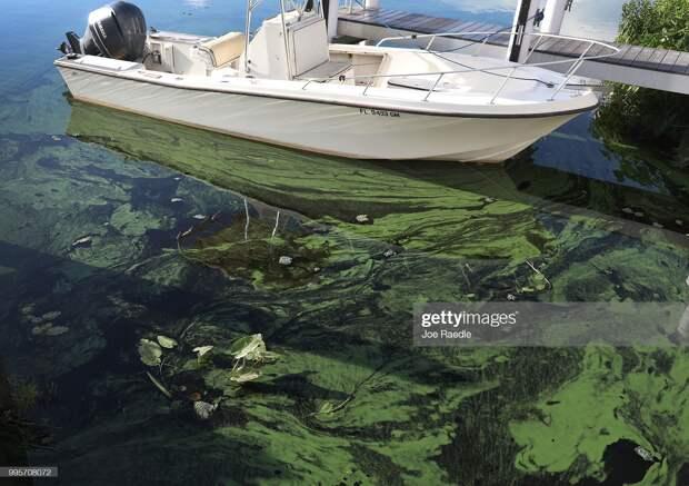 Фото, показывающих, что экологи даже преуменьшают проблемы планеты
