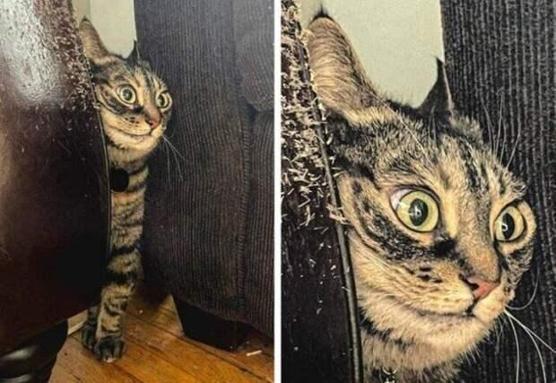 Иногда животные могут быть очень похожи на людей