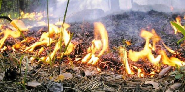 В Пермском крае тушат более 20 гектаров природных пожаров