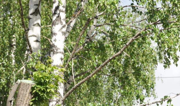 ЖКХ в Можге загрязнило атмосферный воздух на 28 млн рублей