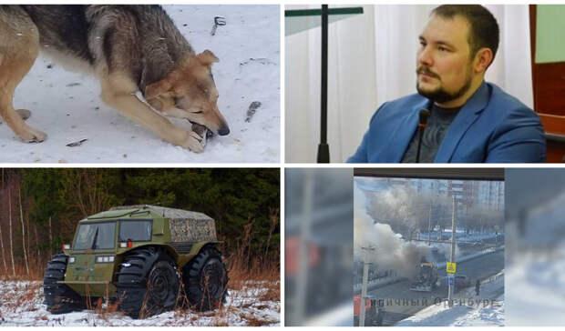 Задержание экс-депутата, собачьи атаки игерой-тракторист: итоги дня вОренбуржье