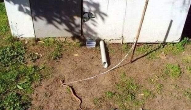 Сторожевая змея Безумцы, идиоты, как скучно я живу, россия, смешно, фото, что вытворяют