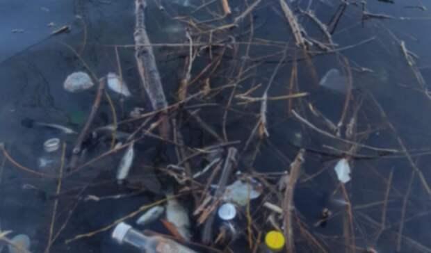 Вказанском водоеме нашли много мертвой рыбы