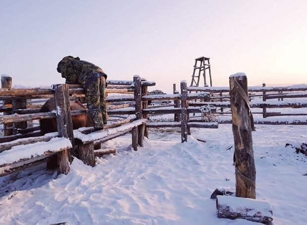 Основная масса якутских лошадей сосредоточена в долинах среднего течения реки Лены, а также севернее, в бассейнах Яны, Колымы и Индигирки Порода, животные, лошадь, россия, саха, фото, якут, якутия