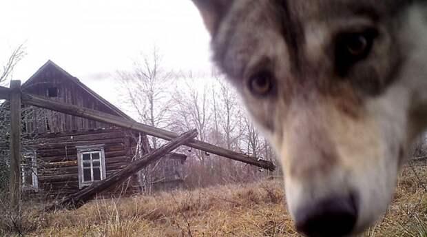 Шокирующие новости из Чернобыля