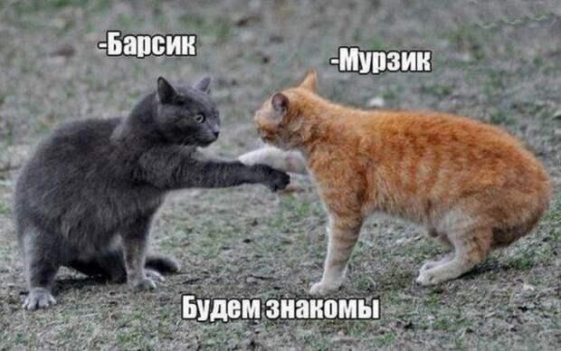 1477474328_memy-9