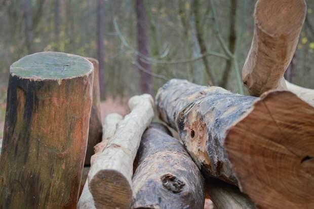 Духи леса наказали жителя Игринского района за срубленное дерево