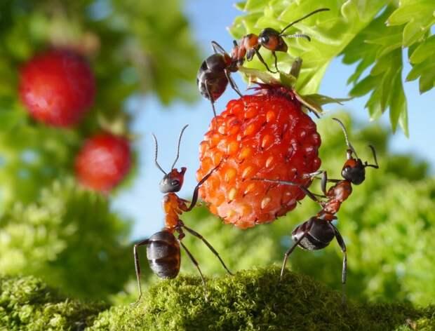 13 народных способов борьбы с муравьями