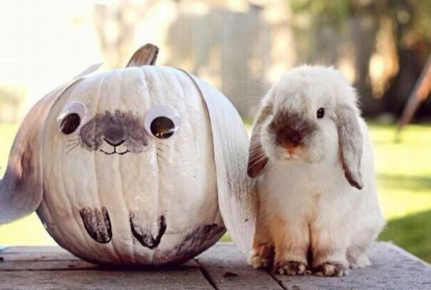 Милая тыква не на Хеллоуин