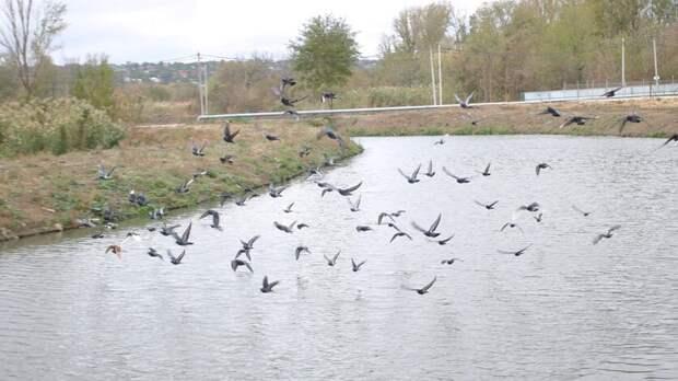 Вводоемах Ростовской области обнаружили высокий уровень микробного загрязнения