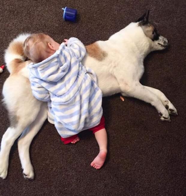 Молодая мама и её ребенок не выжили бы, если бы не чутье их собаки