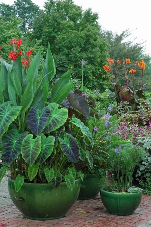 Контейнерные растения. Мини водоем