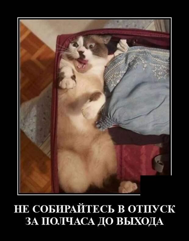 Демотиватор про кота в чемодане
