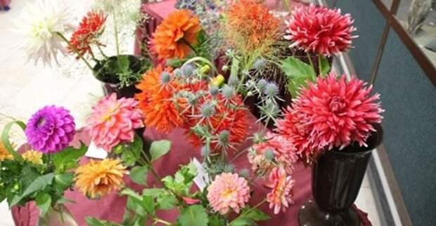 Как собрать букет для учителя из садовых цветов?