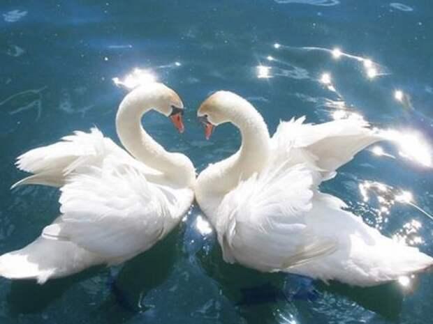 7 вещей, привлекающие в дом любовь и укрепляющие брак