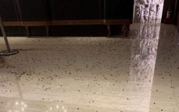 Бандиты отомстили владельцу ресторана тараканами