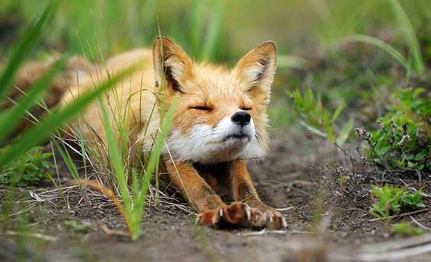 Животные, которые отлично разбираются в йоге. А ты так сможешь?