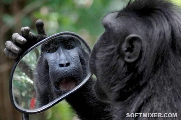 PAY-A-Sulawesi-black-monkey
