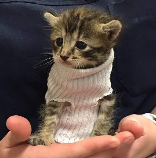 «Ура! Меня забирают!» Котёнок, спасенный от урагана «Мэтью», обрёл новый дом