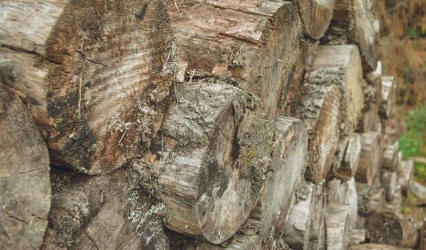 Приморским компаниям разрешили арендовать лесные участки наполвека, носусловиями