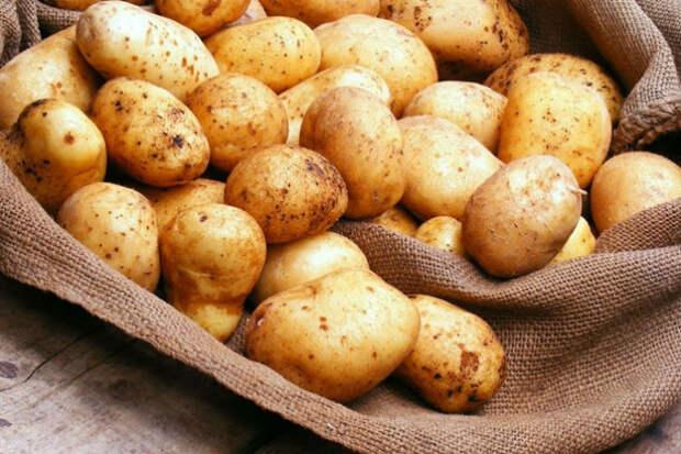 Как сажают картошку в Китае