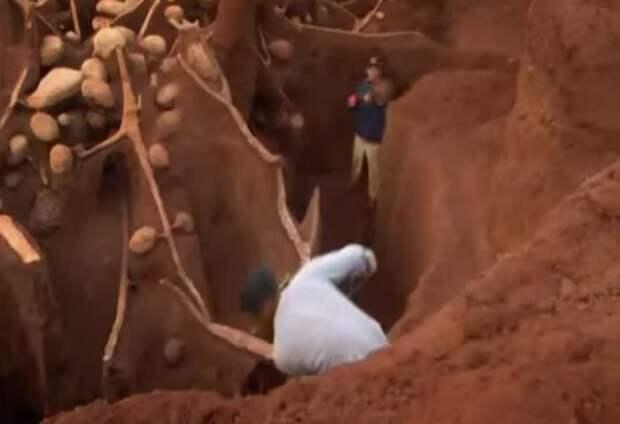 Учёные раскопали колоссальный подземный город муравьёв - видео-10