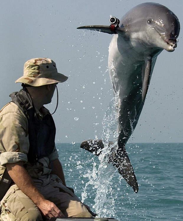 Малоизвестные факты о дельфинах