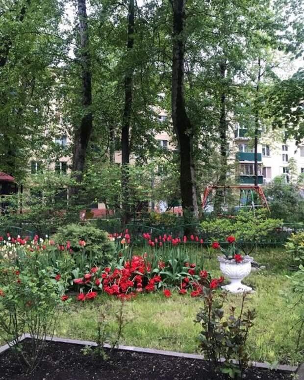 Дворик на улице Клары Цеткин – украшение Войковского
