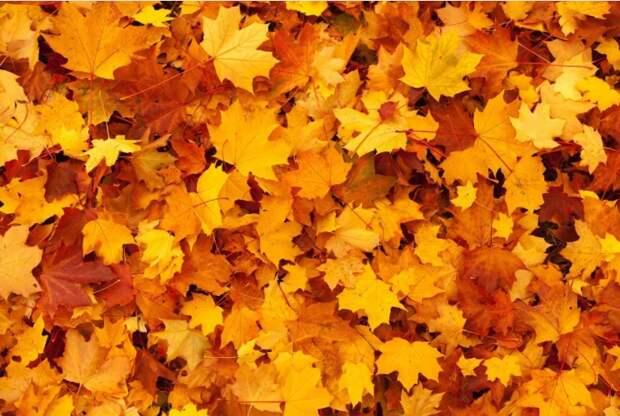 Мешки с листвой уберут с газонов на Костромской