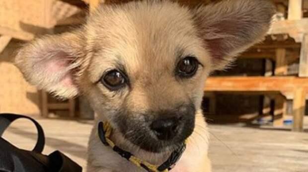 Встретив на Бали щенка, девушка не планировала брать его к себе. Но четвероногая малышка вдруг заболела