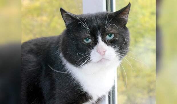 Грустный кот ищет дом. Людей удивляет его необычная внешность, но никто не торопится его приютить
