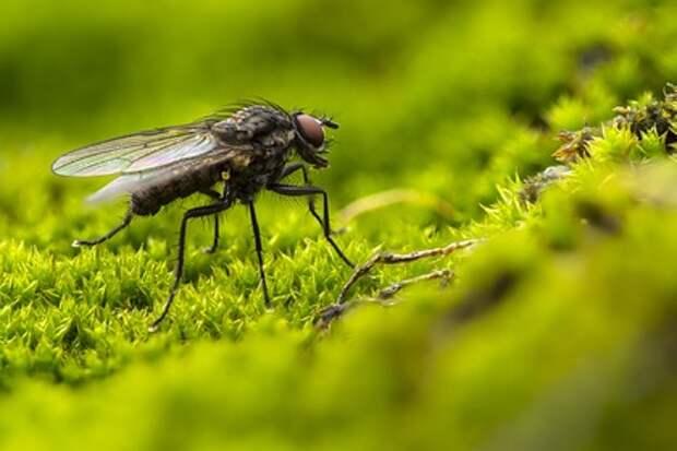 Француз ловил муху, а нашел проблемы