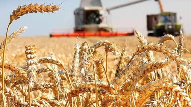 В Ленинградской области собран рекордный урожай зерновых культур