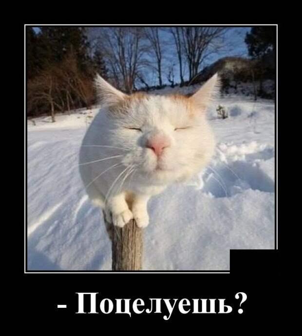 Демотиватор о котике