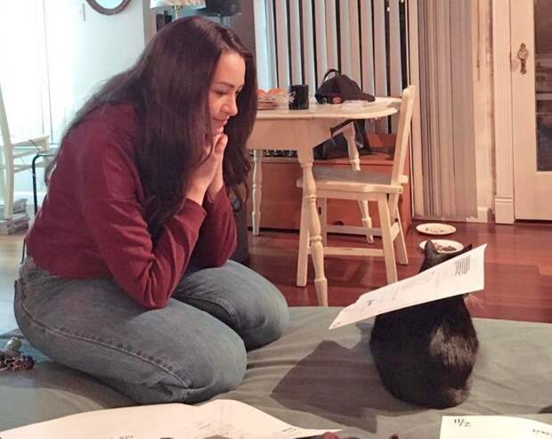 Коты, которые помогают своим людям как могут
